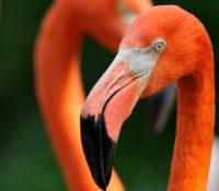 blog pink flamingos header