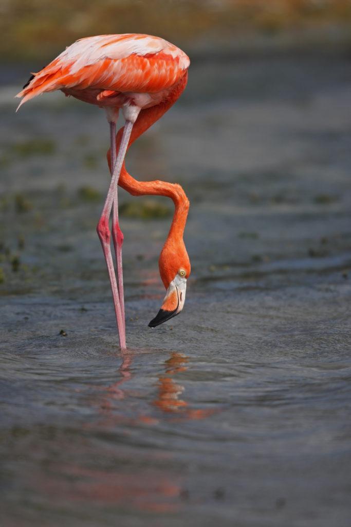 pink flamingos blog