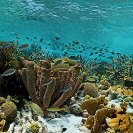 Adventure Makers Bonaire snorkeling