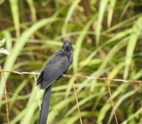 februari birdwatching
