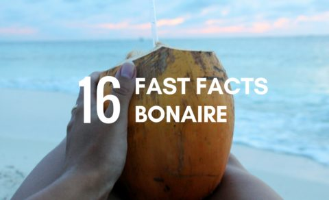 16 fast facts about bonaire